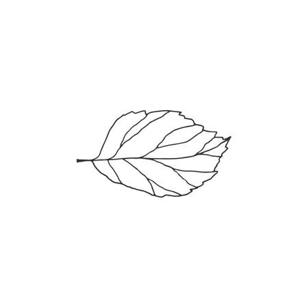Hand drawn vector leaf. Simple doodle floral icon. Ilustracja