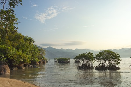 mangrove bushes in the sea about the coast at sunrise in Indonesia Stock Photo