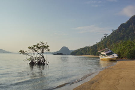 the thrown boat and mangrove at the beach in Indonesia