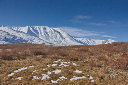 autumn faded meadow against the background of the snow covered ridge in Altai