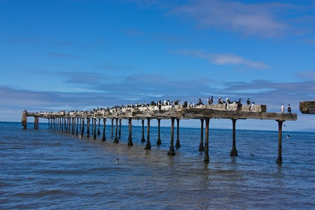 blackandwhite: cormorants on an old pier against the background of the sky and the sea to Punta Arenas in Chile