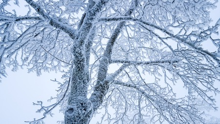 Winter scene: frozen tree branches covered with snow on a cold day.