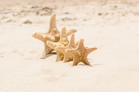 Big and small starfish on a beach. 4 sea stars standing in row on golden sand near sea on sunny day. Focus on first seastar, shallow dof. Family summer vacation concept. Summer wallpaper or background