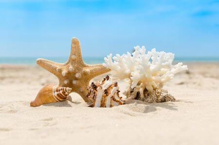 Coquillages, coraux et étoiles de mer sur une plage de sable doré par une journée ensoleillée. Eau de mer floue et ciel flou en arrière-plan. Concept de vacances et de détente d'été
