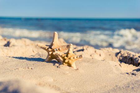 Grandes et petites étoiles de mer sur une plage. Un couple d'étoiles de mer debout sur du sable doré près de la mer par une journée ensoleillée. Concept de vacances d'été romantique. Fond d'écran ou fond d'été