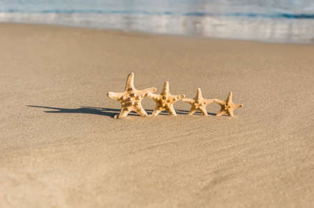Big and small starfish on a beach. Four sea stars standing on golden sand near sea on sunny day. Family summer vacation concept. Summer wallpaper or background Stock Photo