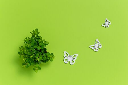 Small green house plant and three white wooden butterflies on green background. Cute home decoration. Ecology concept with copy space for text. Flat lay composition Stok Fotoğraf