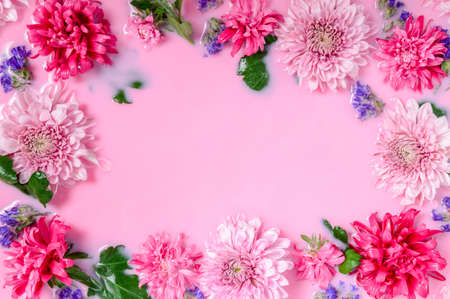 Frame of Chrysanthemum or mums flowers floating in pink milk water bath. Beauty spa, relaxation and wellness treatment. Youth and beauty concept. Tender floral background with copy space, top view