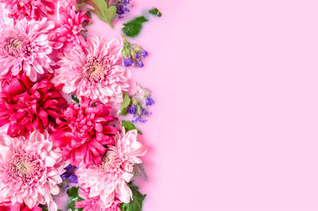 Tender floral background with Chrysanthemum or mums flowers floating in pink milk water bath, left side. Beauty spa, relaxation and wellness treatment. Youth and beauty concept. Top view, copy space