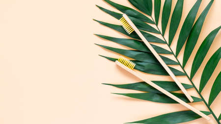 Eco-friendly bamboo toothbrush and green palm leave on pastel beige background. Two natural wooden toothbrushes as plastic free dental care product. Zero waste, sustainable lifestyle concept