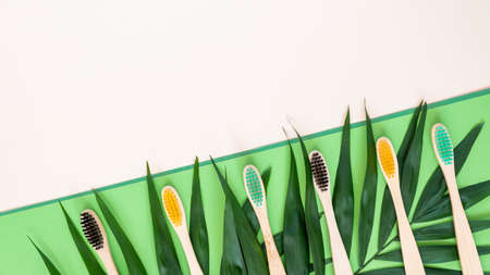 Eco-friendly bamboo toothbrushes and palm leaves on pastel beige and green background. Colorful natural wooden tooth brushes as plastic free dental care product. Zero waste, sustainable lifestyle