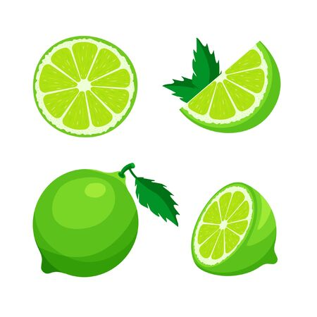 Set of fresh whole, half, cut slice of lime isolated on white background. Citrus fruit and leaves. Vegan food vector icons in a trendy cartoon style. Healthy food concept.
