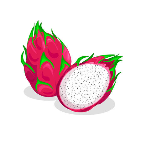 Fresh whole and half of pitaya isolated on white background. Dragon Fruit icon with shadow. Vegan food vector icons in a trendy cartoon style. Illustration