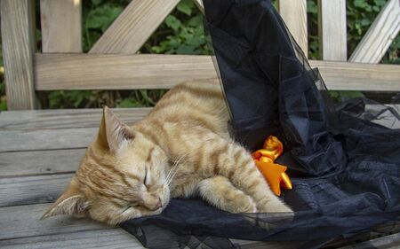 halloween decorations and ginger cat