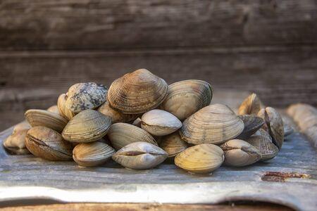 fresh tasty healthy mollusk wongole