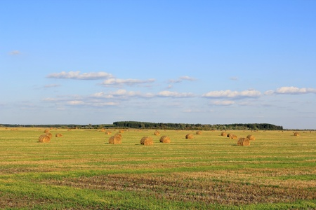 Summer landscape with hay, field and blue sky Stock Photo
