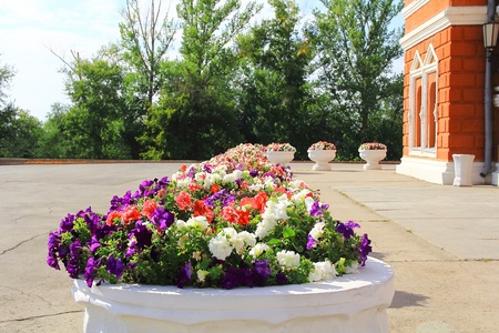 varicoloured: Town scenery with varicoloured flowers in sunny day