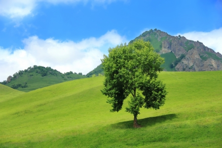 Image of beautiful landscape with green tree