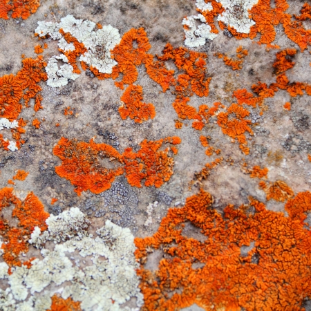 Image of texture with colorful mineral photo
