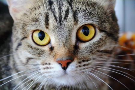 Image of cat Stock Photo