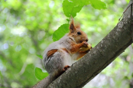 Image of eating squirrel on tree in park Stock Photo