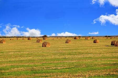 hay field: Immagine di paesaggio con fieno, campo e cielo blu