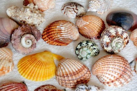Image of seashells on the blue towel Stock Photo