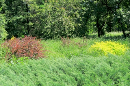 Summer forest with yellow and red shrubberys Stock Photo