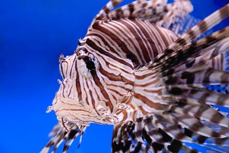 scalar: Image of aquarium fish in blue water Stock Photo