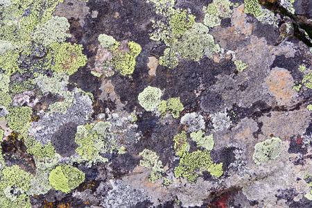 roughness: Photo of background colorful roughness gritty texture