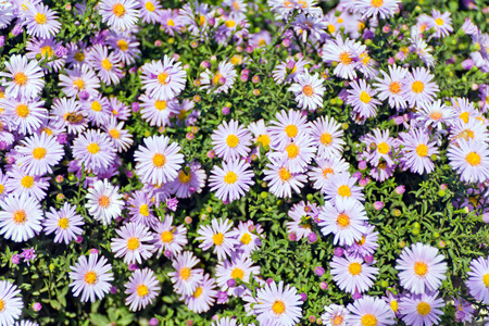 Summer photo of many flowers on green background