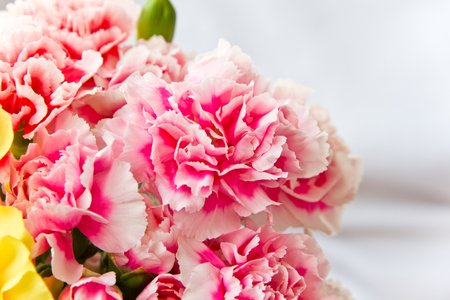 carnations: Photo of the red carnations in bouquet