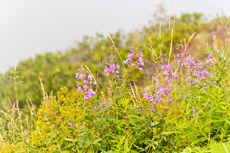 Summer photo of many mountain flowers in summer day