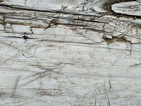 Texture of old white wood.