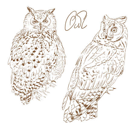 bird of prey: owl  Illustration