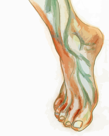 tiptoe: Water-colour drawing of humans foot