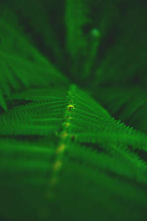 Green fern leaves. Top view. Nature background.