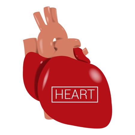 Realistic heart - vector Illustration