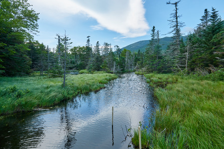 appalachian: Forest and River near the Appalachian Trail in New Hampshire