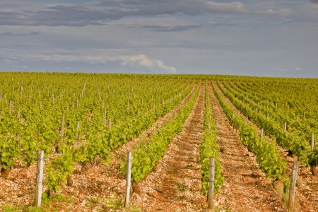 The vineyards of Sancerre in the Loire Valley of France  photo