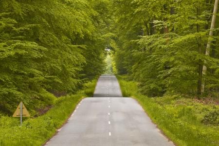 De bochtige weg en dichte bossen die leidt tot Lyons-la-Foret