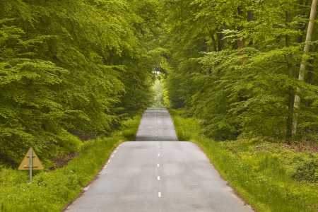 winding road: The winding road and dense woodland that leads to Lyons-la-Foret