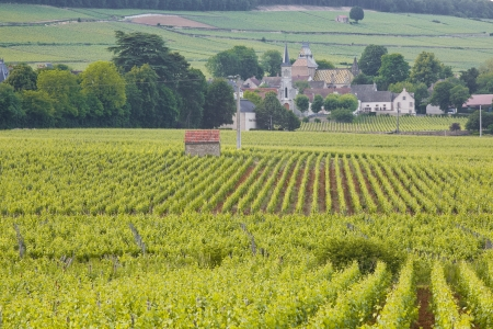 Looking through the vineyards towards Aloxe-Corton in Burgundy  Stock Photo