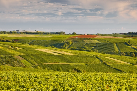 The vineyards of Sancerre in the Loire Valley. Stock Photo