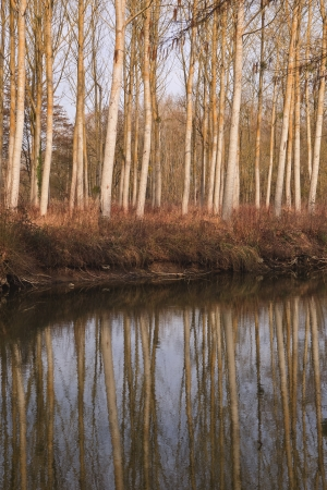 Trees reflecting in a river in France. photo