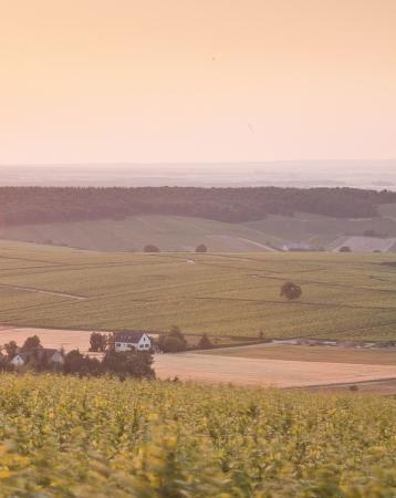 The vineyards of Sancerre in France. photo