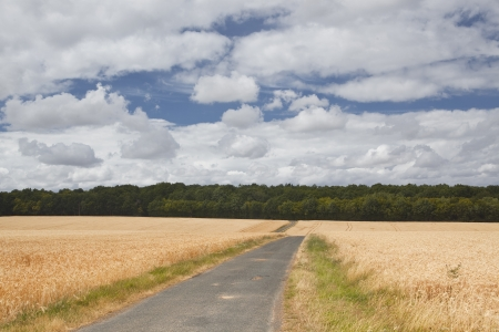 Looking down a country land in France. Stock Photo - 14365236