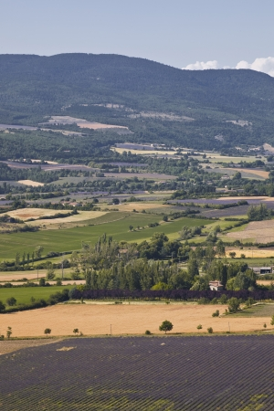 Fields of lavender near to Sault in Provence. photo