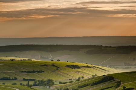 The vineyards of Sancerre at dawn. photo