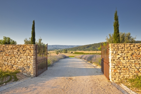 A lavender lined driveway in Provence. photo